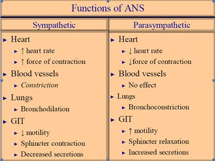 Functions-ANS